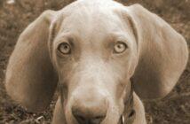 Schnell schwanger werden: Tipp #10 - Schaffen Sie sich einen Hund an