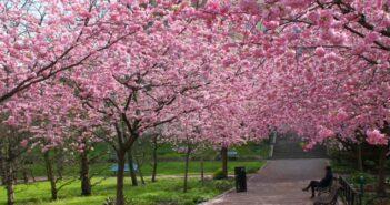 Fruchtbare Tage erkennen: So geht's